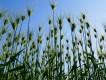 緑肥を利用した栽培③ー緑肥を利用するメリット