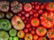 野菜の物語/トマト